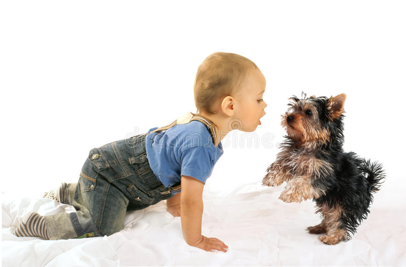 Baby boy and dog puppy playing stock photos