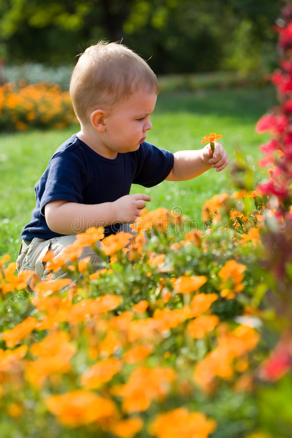Baby boy in flowers royalty free stock photography