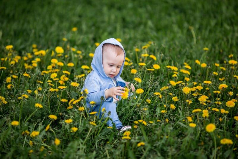Baby boy sitting on dandelion flowers meadow royalty free stock photos