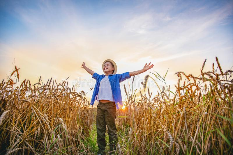 Baby boy standing in a field of wheat ears wide open hands looking into the distance smiling with happiness. Boy standing in a field of wheat ears wide open stock photo