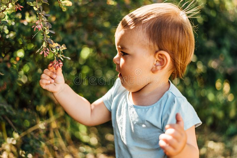 Baby boy touches green leaves. Lifestyle homeschooling, eco life, conscious, close to nature development. Sunny day. Baby boy touches green leaves. Lifestyle stock photos