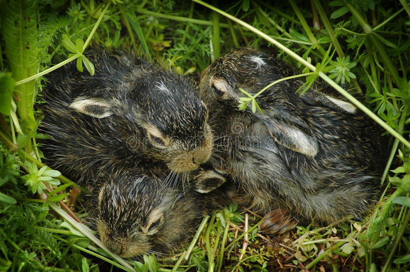 Download Baby Bunnies On Green Grass Stock Image - Image: 13139233