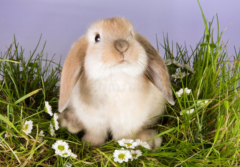 Download Baby bunny stock image. Image of cute, rabbits, daisies - 4039331