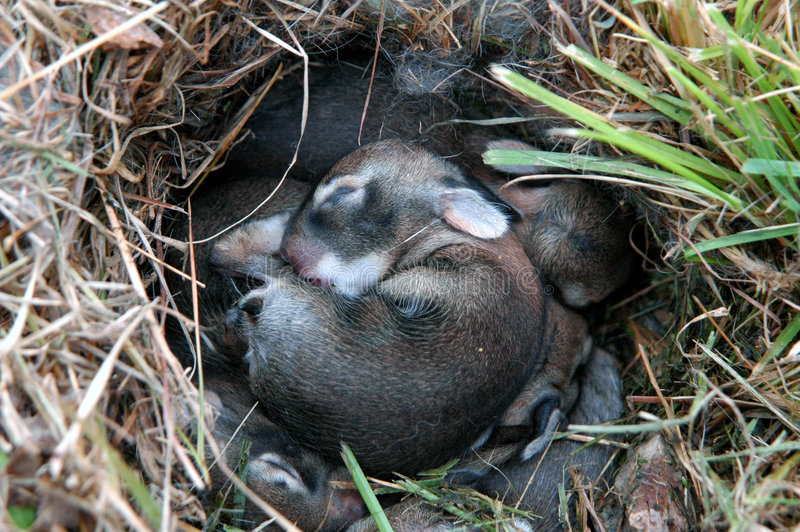 Baby Bunny stock photos