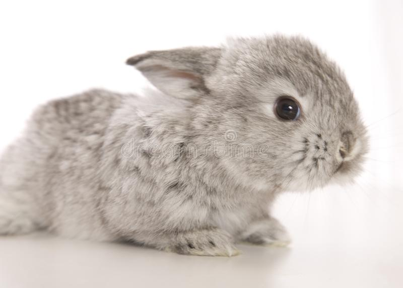 Baby Bunny Charm royalty-vrije stock foto