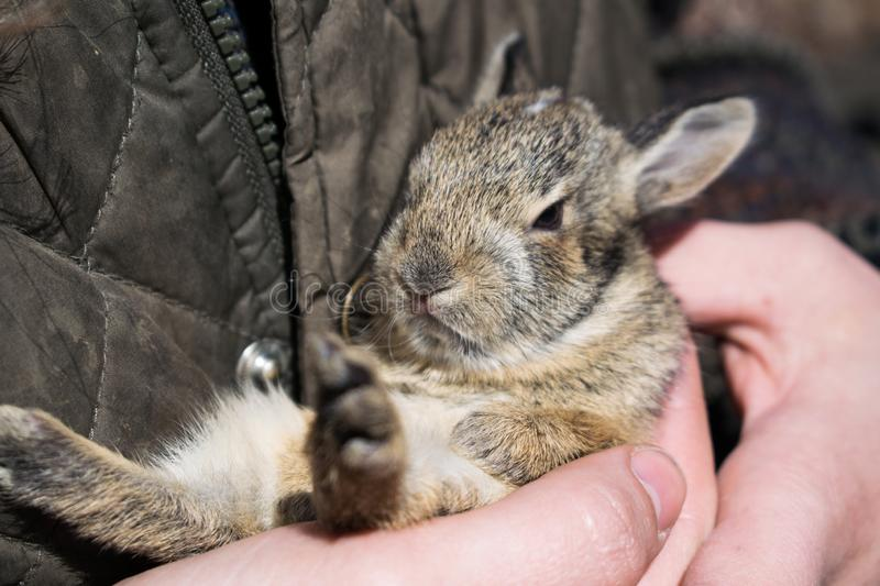 Baby Bunny in the woods stock image