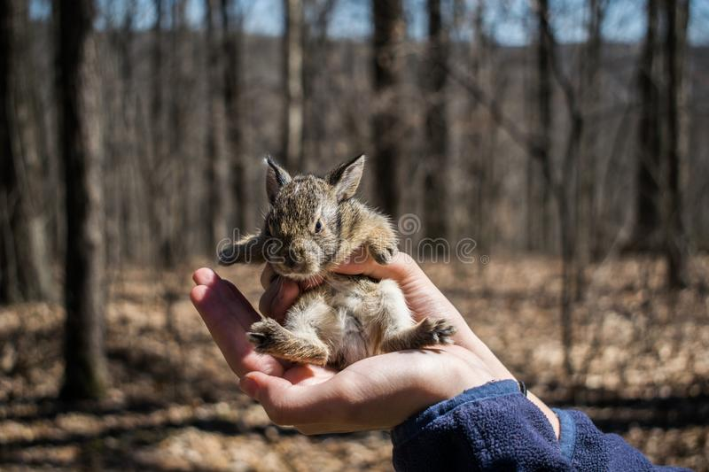 Baby Bunny in the woods stock photo