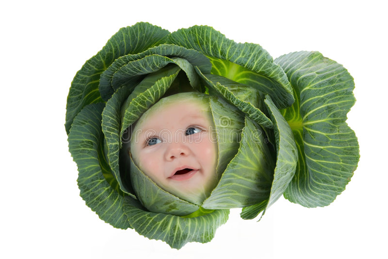 Baby among cabbage leaves. Isolated on white royalty free stock images
