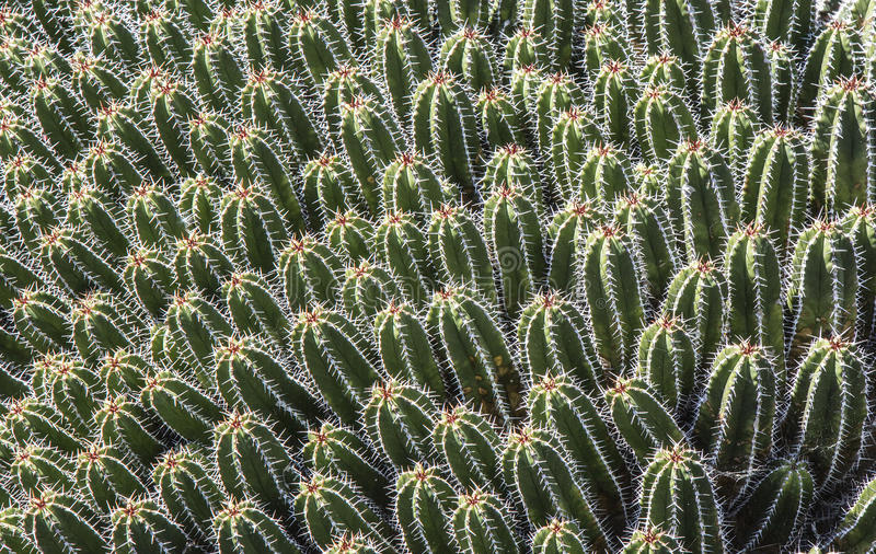 Baby Cacti At Jardin De Cactus Stock Image Image of nature jardin