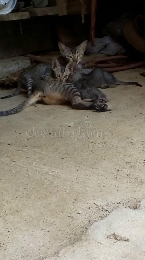 Baby cat cuddlling mother stock photos