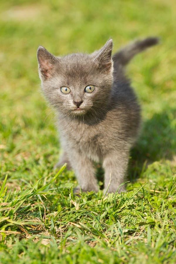 Download Baby cat stock photo. Image of funny, grass, gaze, garden - 38886272
