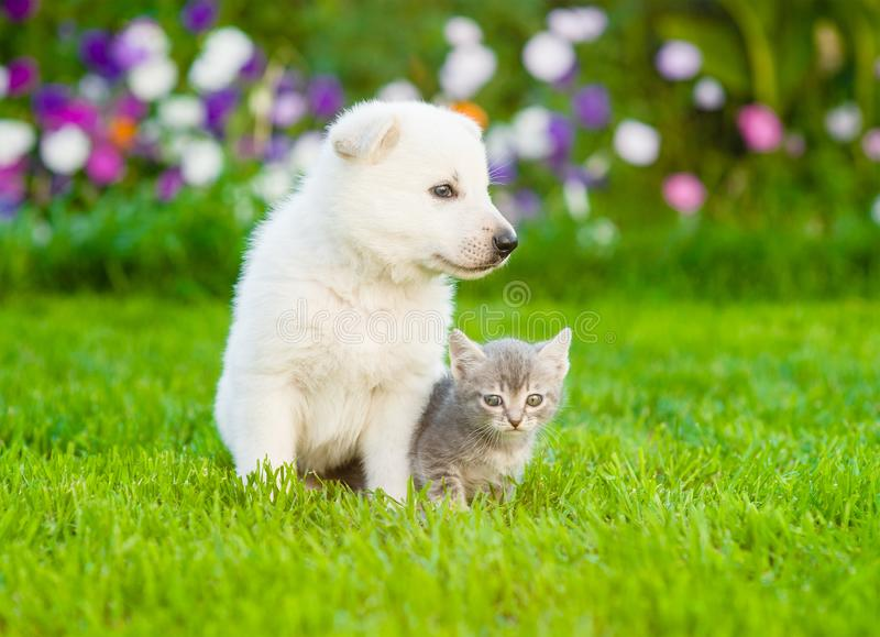 Baby cat and puppy sitting together on summer grass stock images