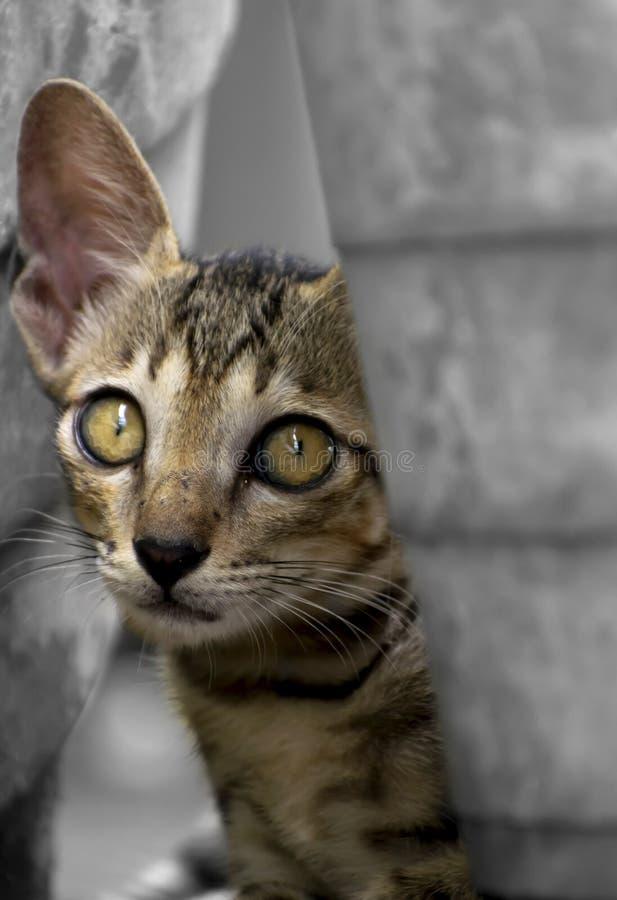 Baby cat portrait. stock photos