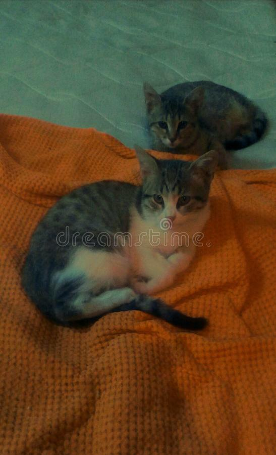 Baby cats on mattress. Young motley cute cat on orange blanket looks to me with beautiful eyes.In the backround another baby grey cat looks to me carefully stock photos