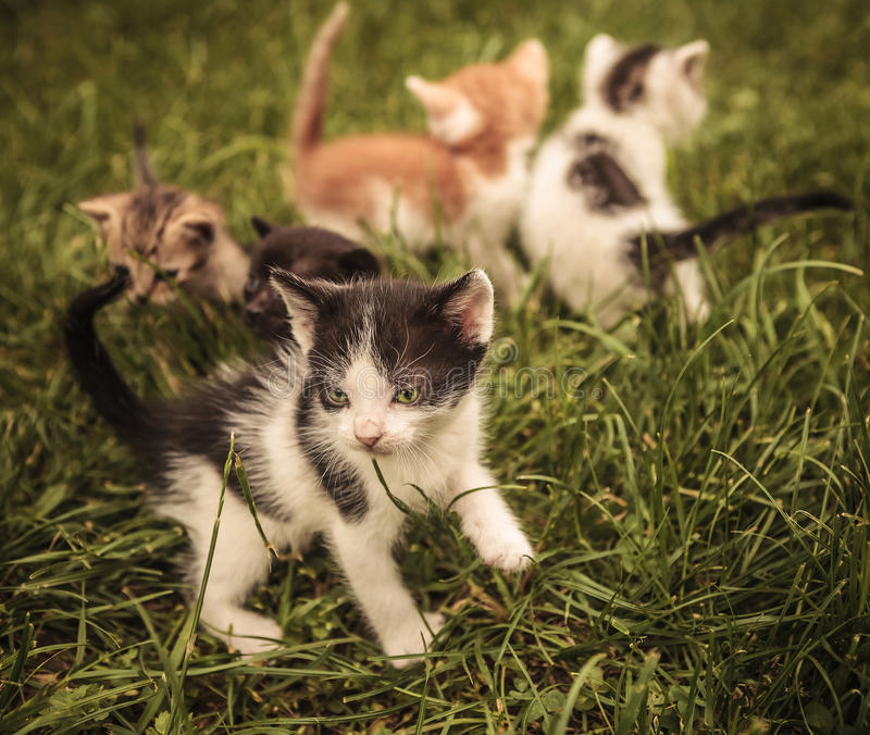 Baby cats playing in the grass stock images