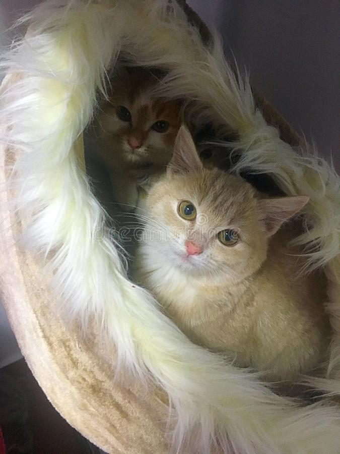 Baby cats. Sweetest baby cats, standing in a cat basket stock photo