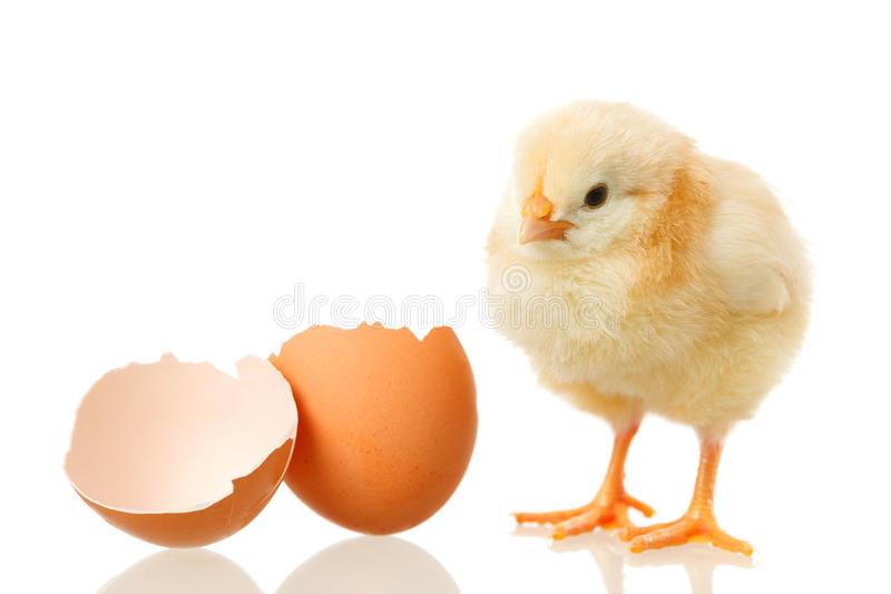 Baby chicken and egg on white. Sweet little baby chicken with egg on white background stock photo