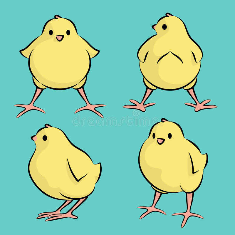 Baby Chicken From Four Angles. Vector Illustration Of A Baby Chicken From Four Angles royalty free illustration