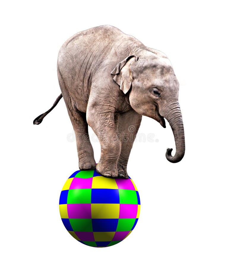 Baby circus elephant royalty free stock images