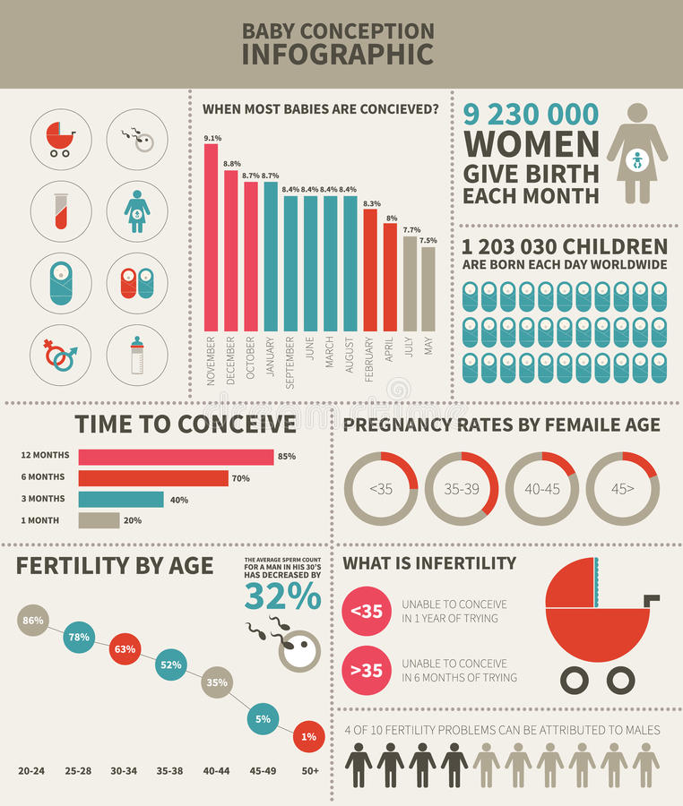 Baby conception infographic vector illustration