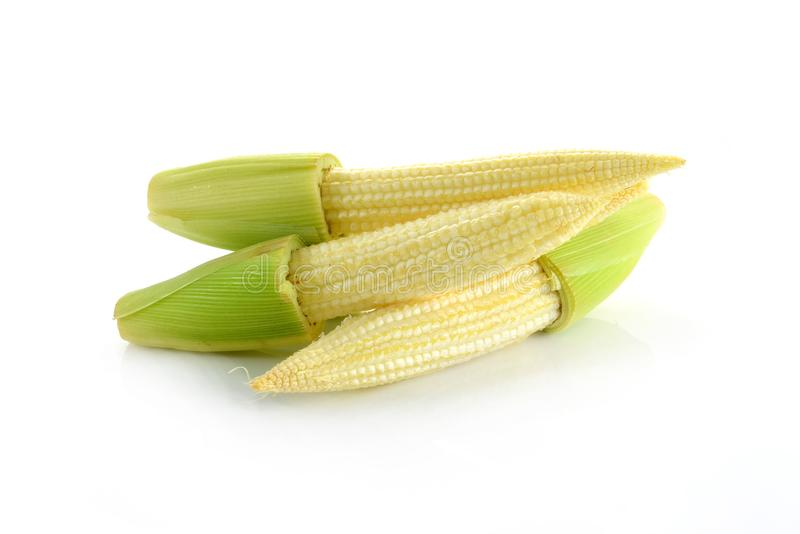 Baby corn isolated on white background royalty free stock photos