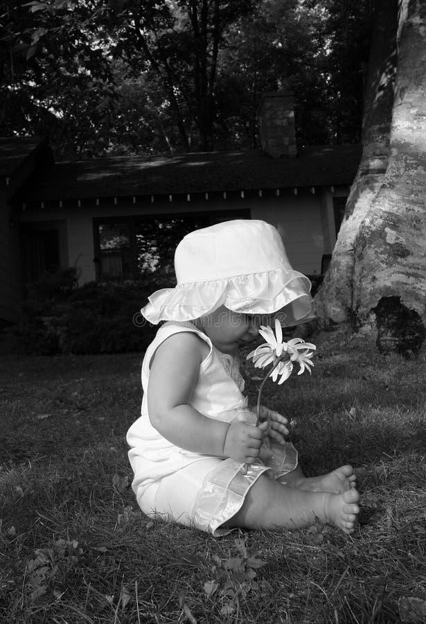 Baby with a Daisy stock photo
