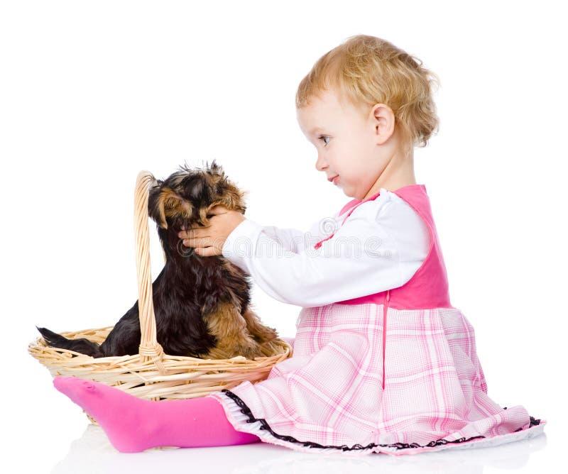 Baby, das Welpen Yorkshires Terrier streichelt Lokalisiert auf Weiß lizenzfreie stockbilder