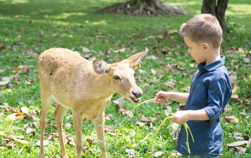 Baby with deer royalty free stock images