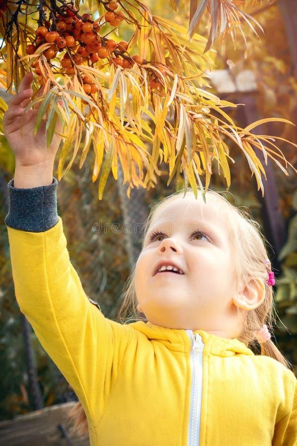 Baby des kleinen Mädchens isst Saisonsanddornbeeren stockbilder