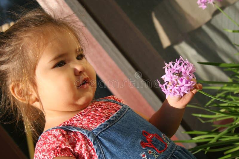 baby die een bloem plukt stock foto