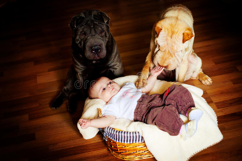 The baby with a dog stock photography