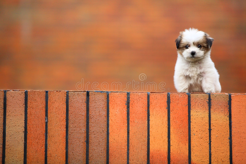 Download Baby dog stock photo. Image of lonely, pets, baby, pity - 4417898
