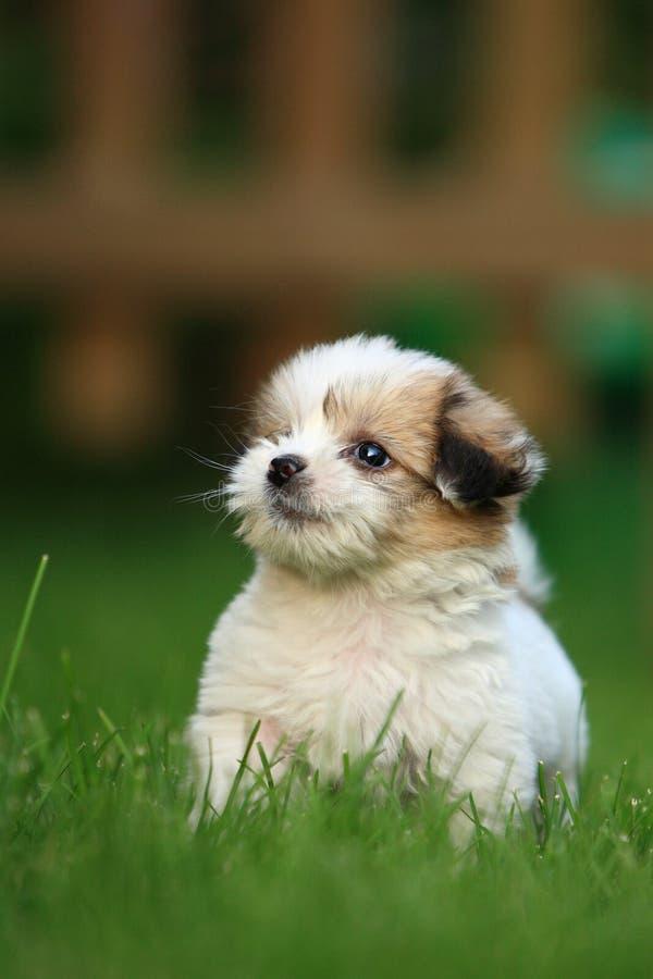 Baby dog royalty free stock image