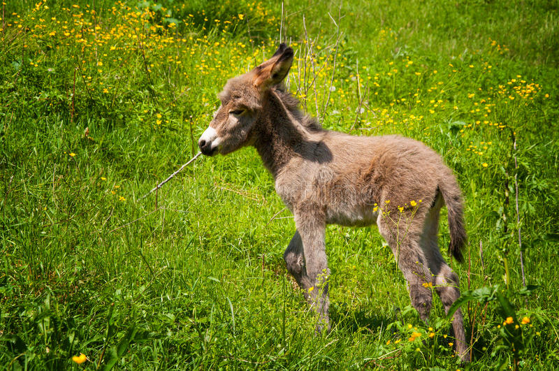 Baby Donkey In Natural Background