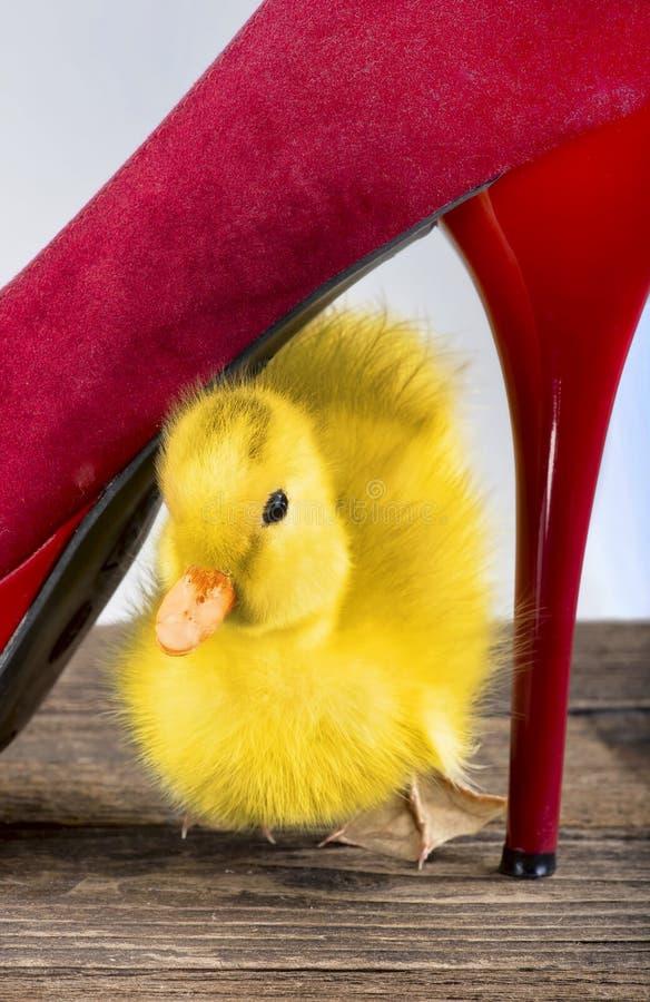 Baby-Ducky Gehen stockbilder