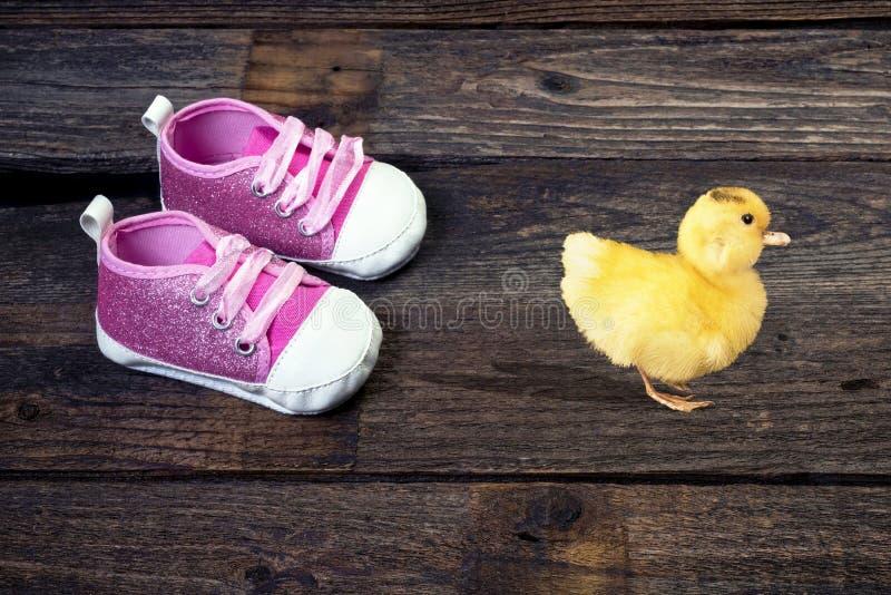 Baby-Ducky Gehen stockfotografie
