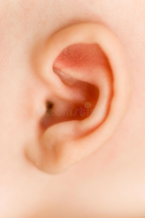 Free Baby Ear Royalty Free Stock Photography - 16384337