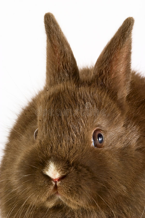 Baby easter bunny rabbit on wh royalty free stock images