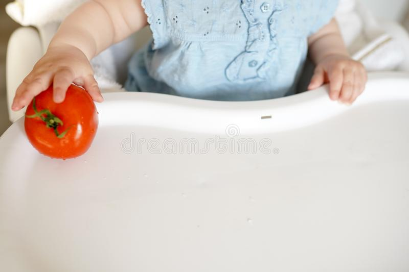 Baby eating vegetables. red tomato in little girl hand in sunny kitchen. Healthy nutrition for kids. Solid food for infant. copy royalty free stock photos