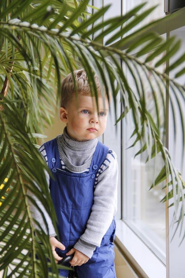 Baby in einem blauen Overall hinter einer Palme nahe dem Fenster stockfotografie