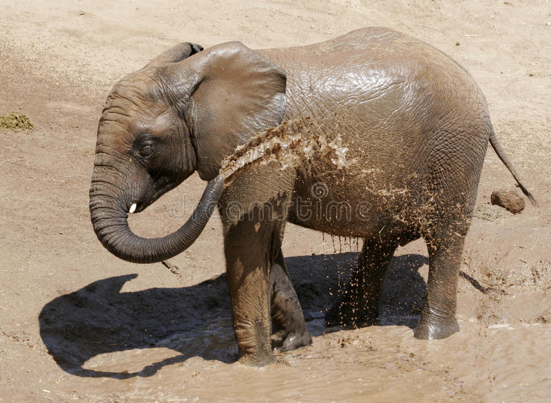 Download Baby Elephant With Spraying Himself With Water Stock Image - Image: 26980045