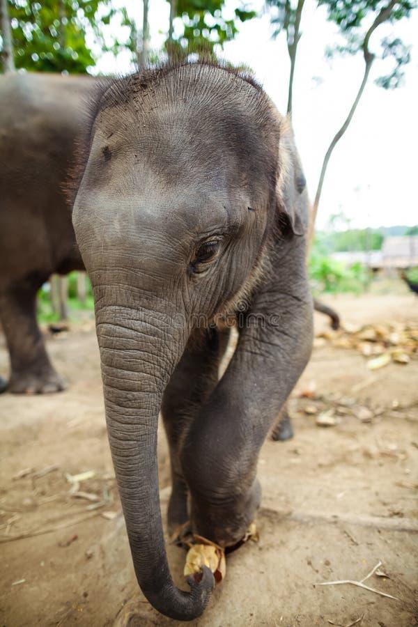 Download Baby Elephants Standing Stock Photo - Image: 26028720