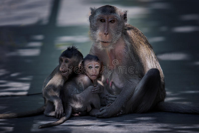 Baby en mamma van aapfamilie royalty-vrije stock afbeelding