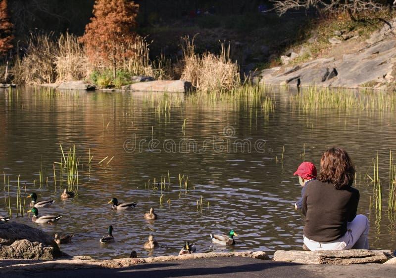 Baby en moeder die eenden bekijken stock foto