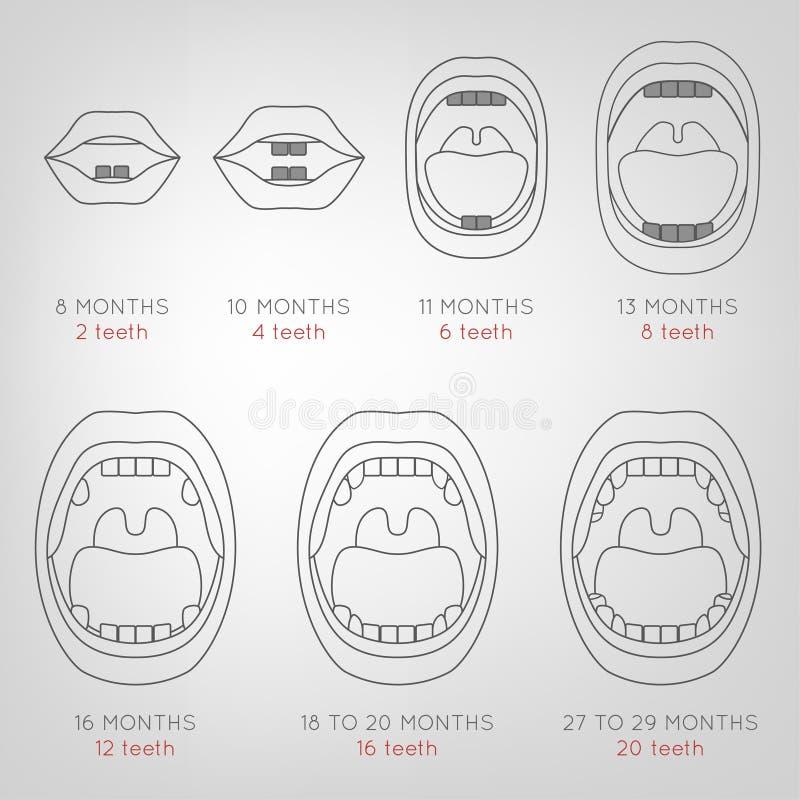 Baby-erstes Zahn-Diagramm lizenzfreie abbildung