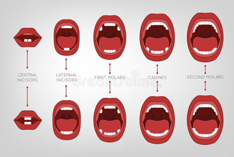 Baby-erstes Zahn-Diagramm stock abbildung