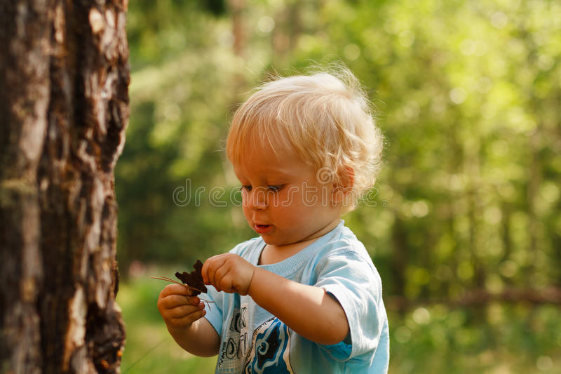 Baby exporing forest royalty free stock images
