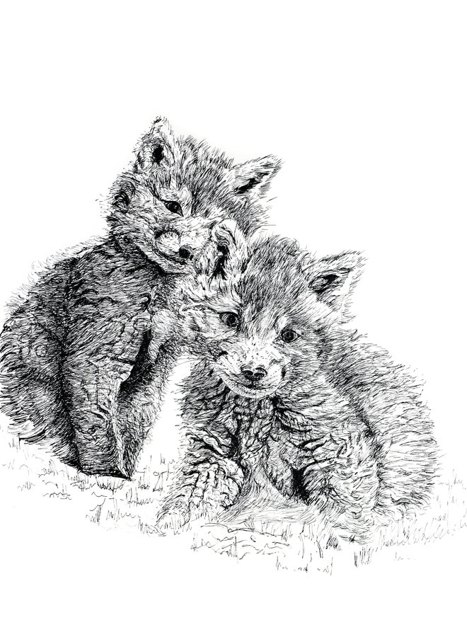 Baby Fox Cubs. Pen and ink hand drawn illustration of a pair of baby fox cubs against a white background. Illustration by marilyna royalty free illustration
