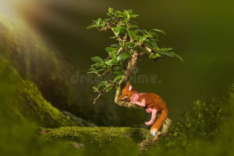 Baby in fox outfit in Bonsai tree. Baby in cute fox outfit sleeping in a bonsai tree stock photography
