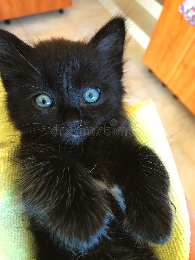 Baby girl black cat stock images